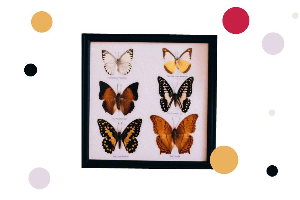Wystawa Motyli Preparowanych